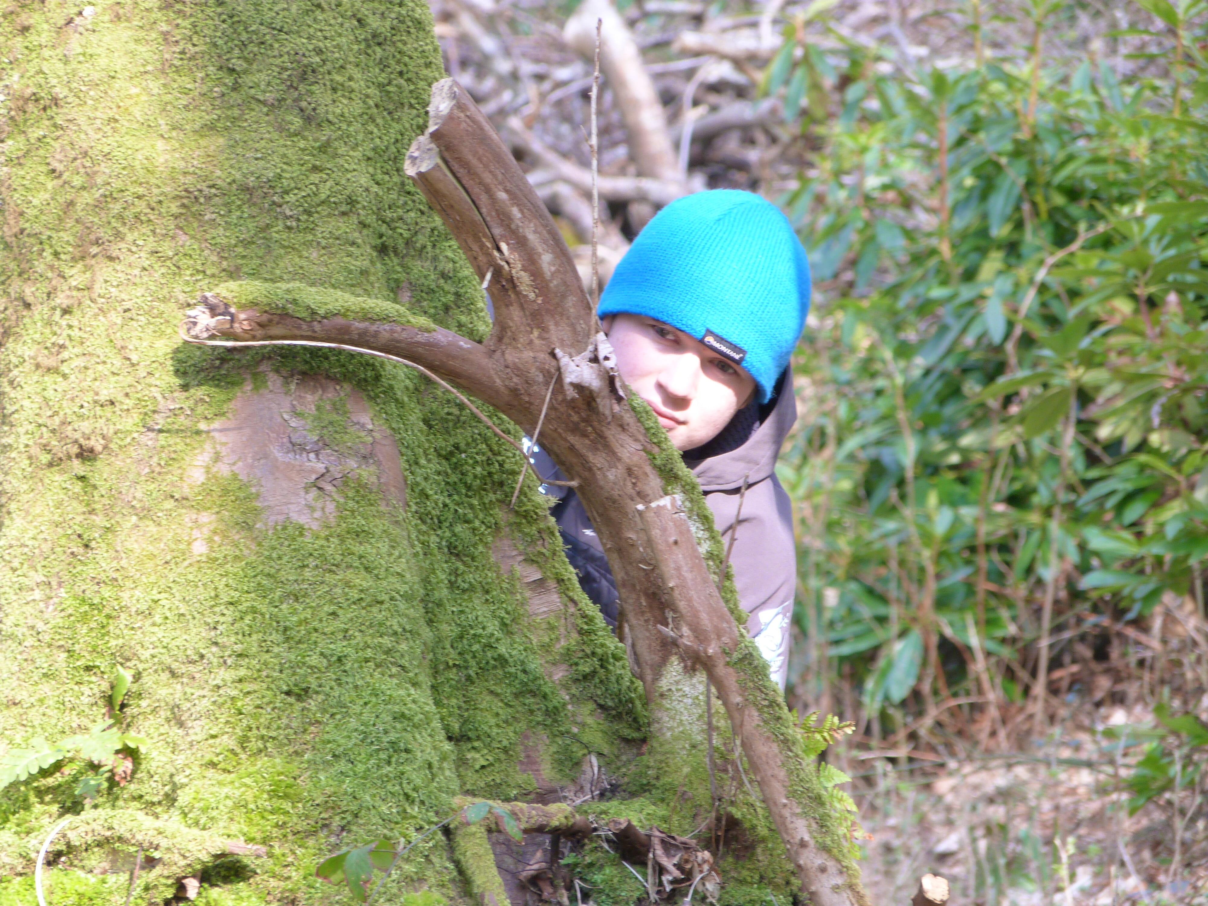 Woodland activity